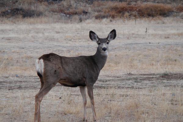 """Bambi"""